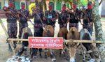 তাহিরপুরের পর্যটন স্পট বারেক টিলায় ভারতীয় গরুর চালান জব্দ